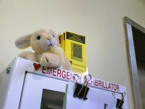 Bunny: First Aid Station, East Side/Mt. Hope YMCA, Providence